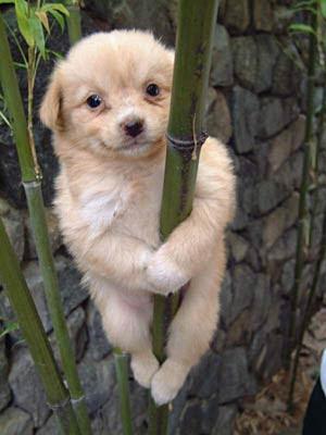 funny pole dancer