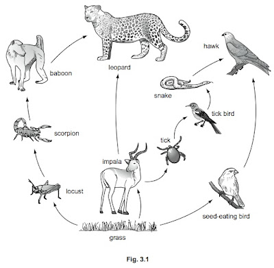 food web examples. food web examples. this food