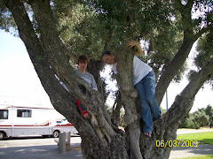 The kids climb an olive tree