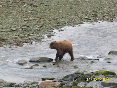 The bear at the creek fishing near the fish hatchery