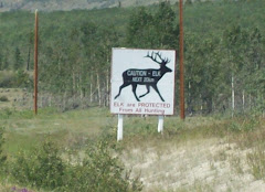 Elk Crossing//We did not see any unfortunately!