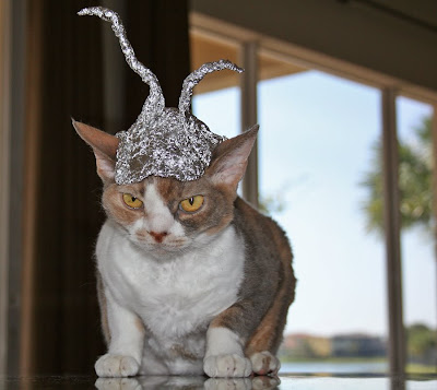 Antenna+cat.jpg