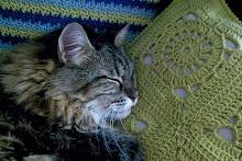 Sofi descansa...