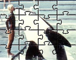Tokitae and Cindy Sue As A Puzzle