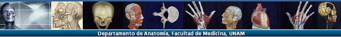 Visita la página de la Facultad de Medicina