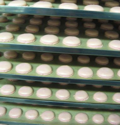 macarons resting