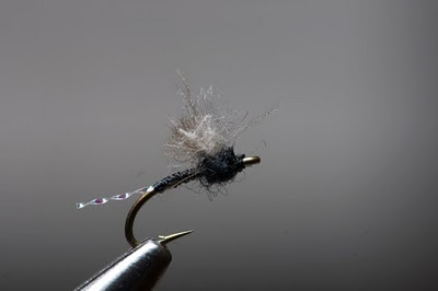 MIDGE FOR TAILWATER TROUT - Fly Fisherman