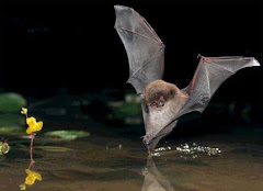 Rare bats roost in Grove Wood