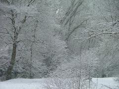 Snowy Snuff Mills 2009