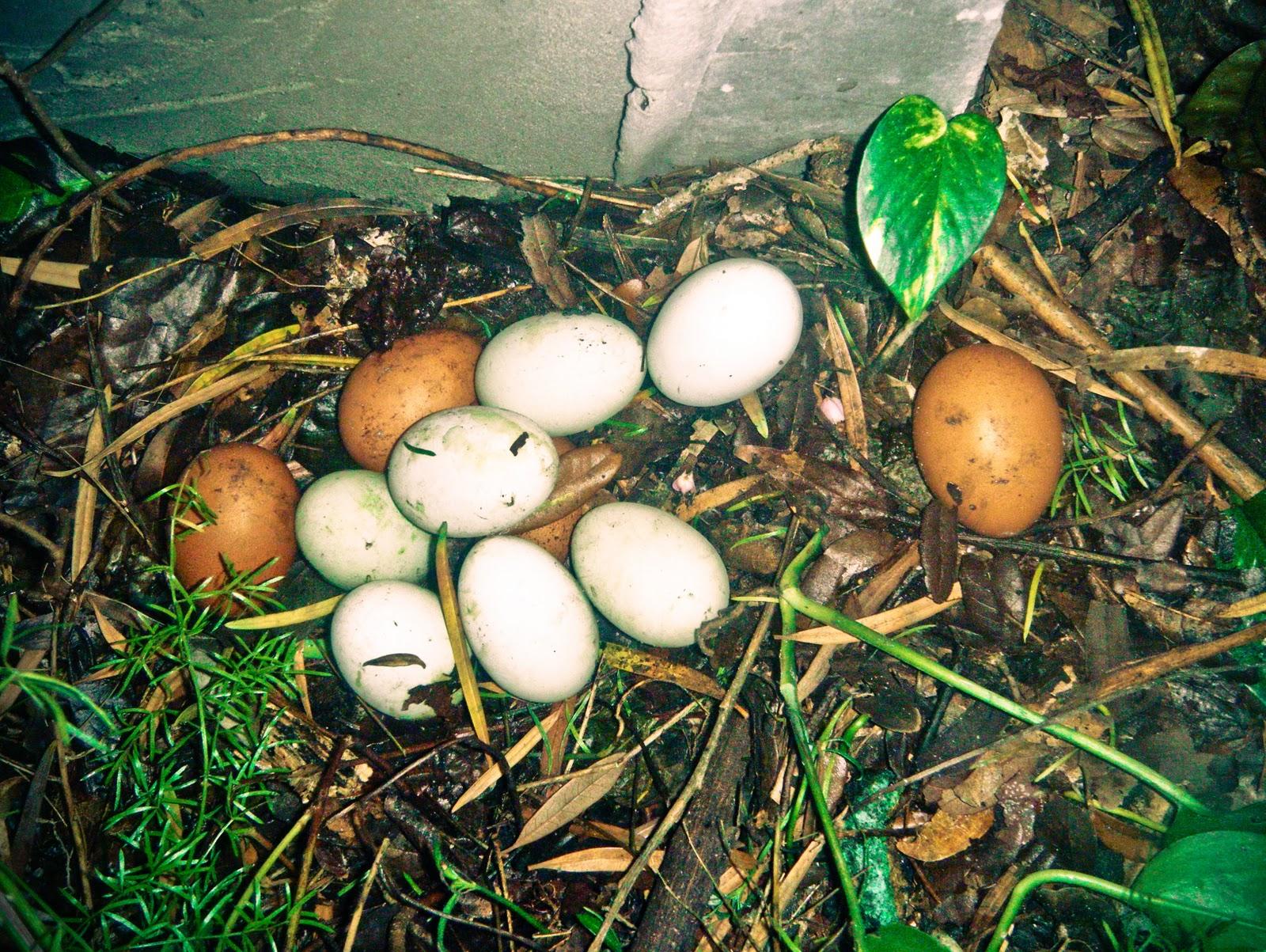 http://2.bp.blogspot.com/_HpE_3Cd7-sw/TNPp6SPgFkI/AAAAAAAADMg/AK_1GFdiZs4/s1600/eggs.jpg