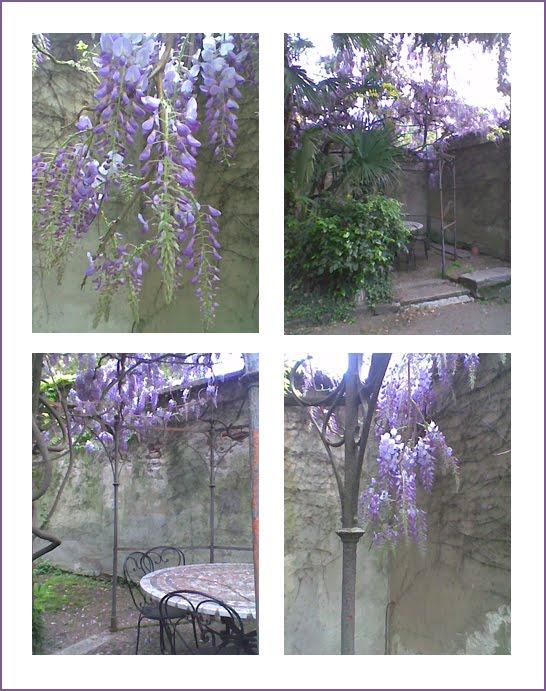 Le chat egoiste tutta colpa del glicine for Pianta ornamentale con fiori a grappolo profumatissimi