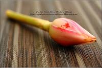 Ginger flower (Phaeomaria) or bunga kantan 姜花