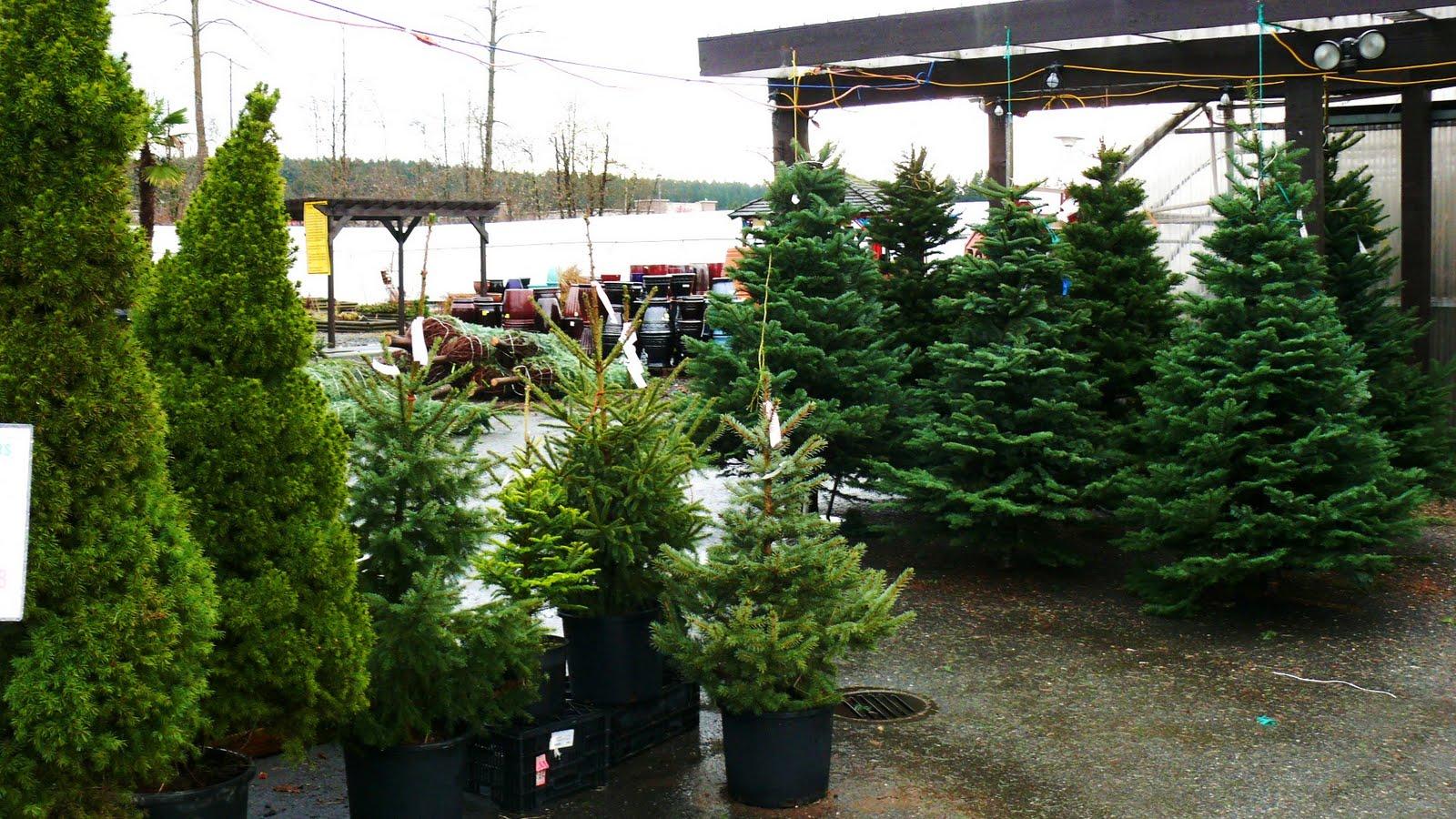 lugar onde fomos comprar nossa árvore tantas opções! Depois que  #436422 1600x900