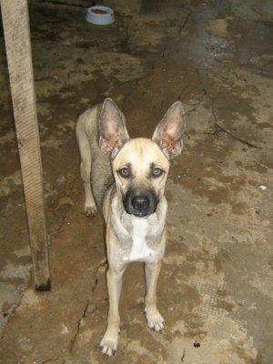 [Cães+para+doação+046.jpg]