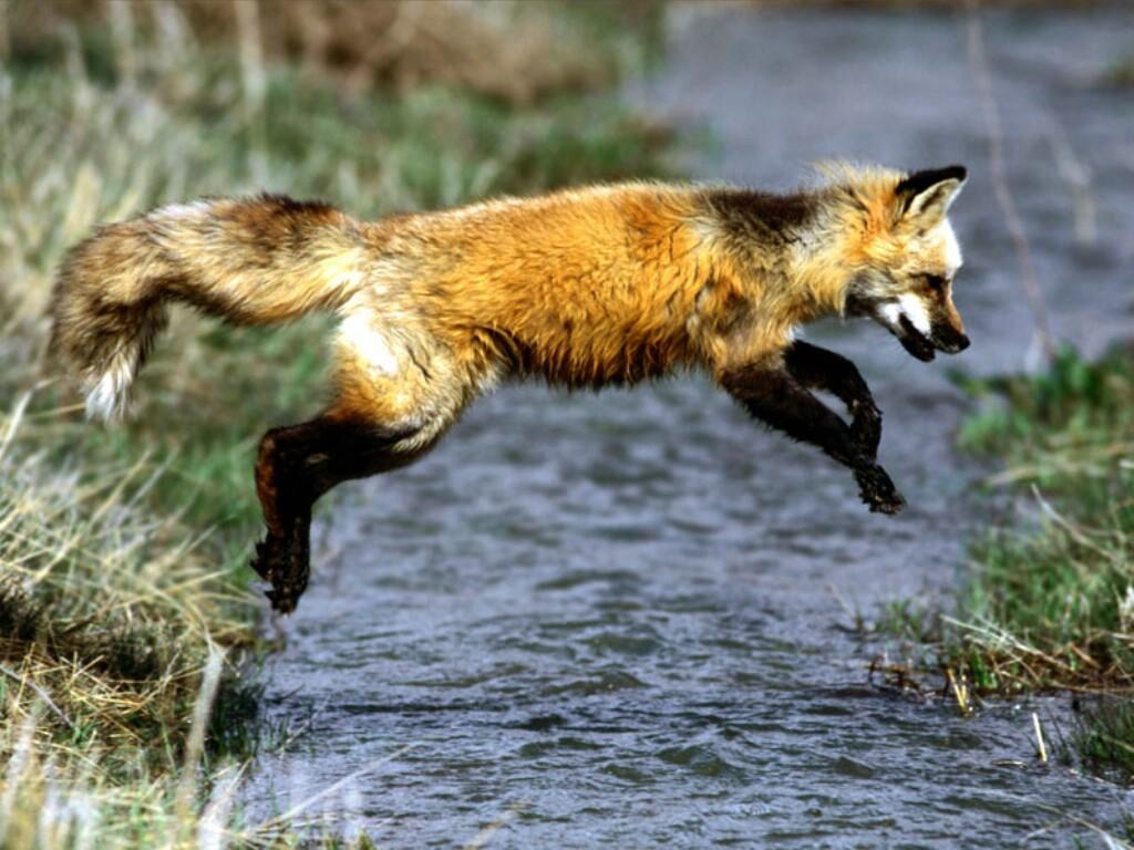 Some amazing wild animals
