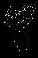 Hajala Niort - Association de danse orientale