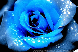 trandafiri albastrii imagini