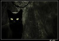 imagini pisica neagra