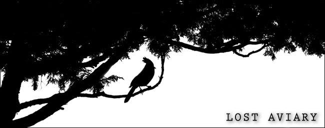 Lost Aviary