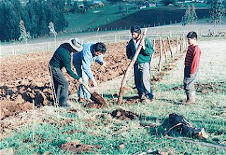 Mapuches+trabajando+en+el+campo+pueblo_m
