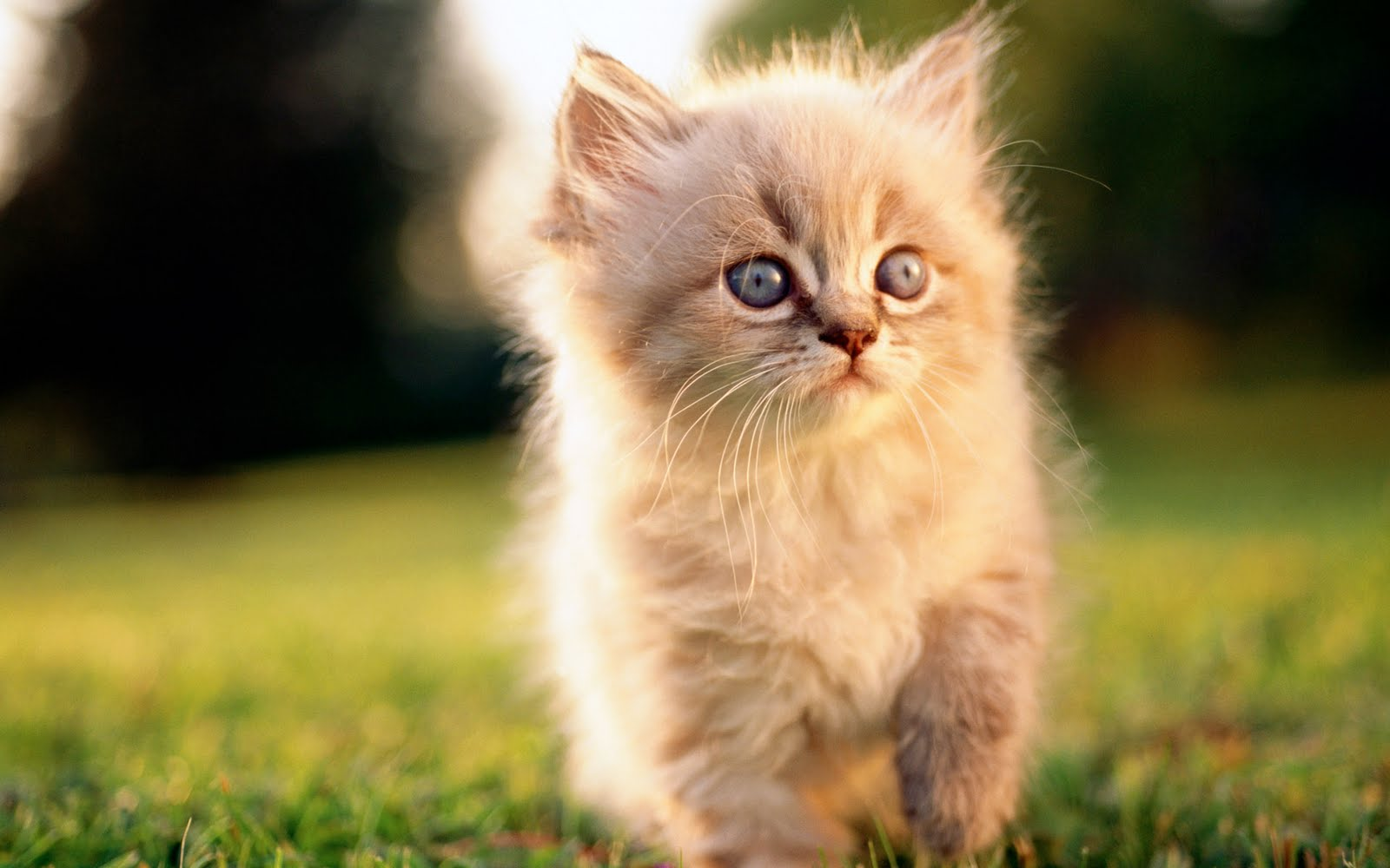Cats Widescreen Wallpapers | HD Wallpapers