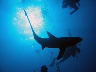 Potápění v Rudém moři - můj začátek