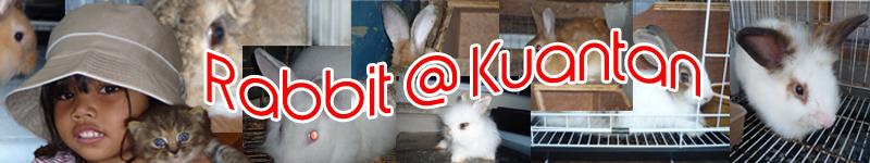 Rabbit @ Kuantan
