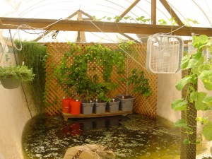 Florida outdoor backyard hydroponic greenhouse converting for Swimming pool converted to greenhouse