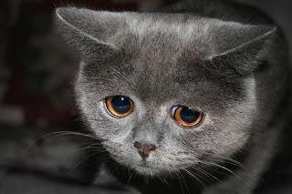 Похоже на печаль?