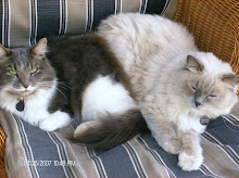 Fluffy & Petal