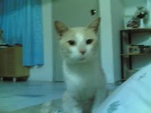 My cat.. John