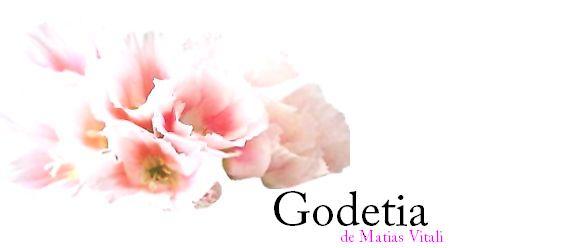 GODETIA, de Matías Vitali