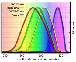 Pigmentos visuales