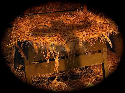 Go back gt gallery for gt manger background