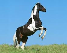 Kyrian's mare, Rhovanion.