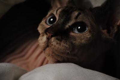 Katten Afschrikken Tuin : Afschrikken katten u hydrocultuur planten