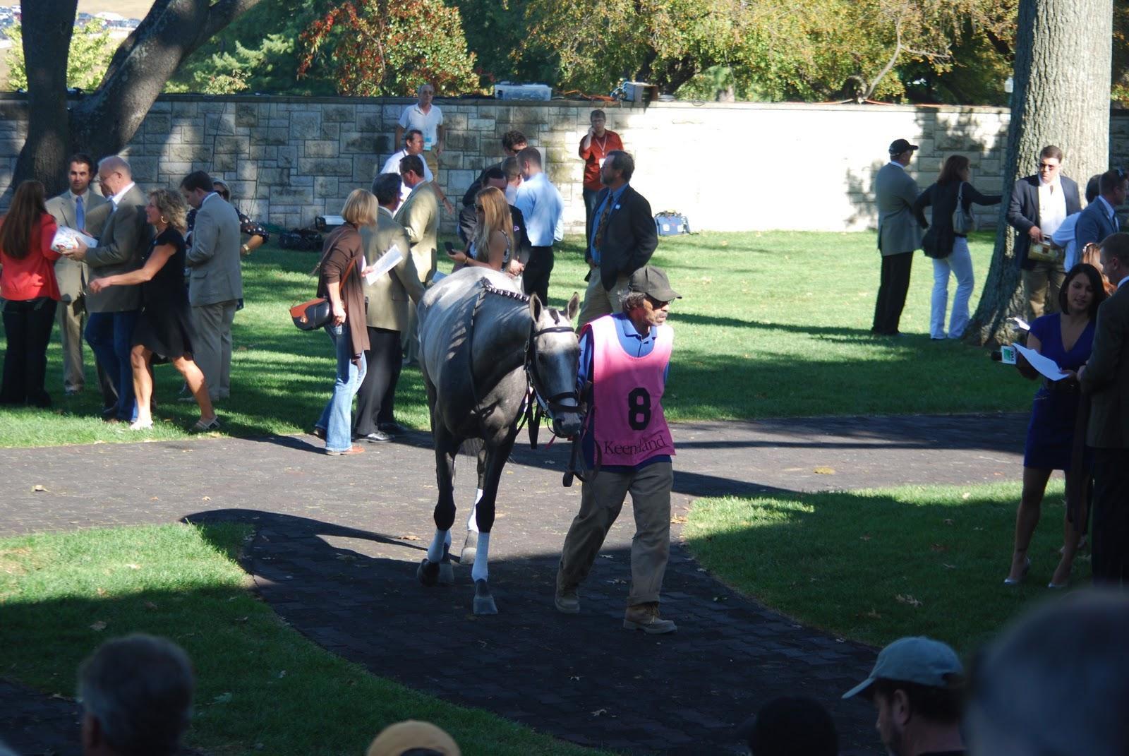 Horsepuckey A Horse Lover S Dream Day