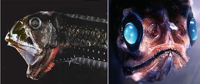 pez víbora