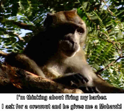 funny images of monkeys. Funny monkeys