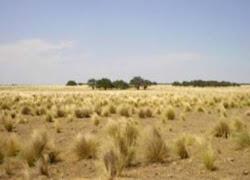 biomas argentino