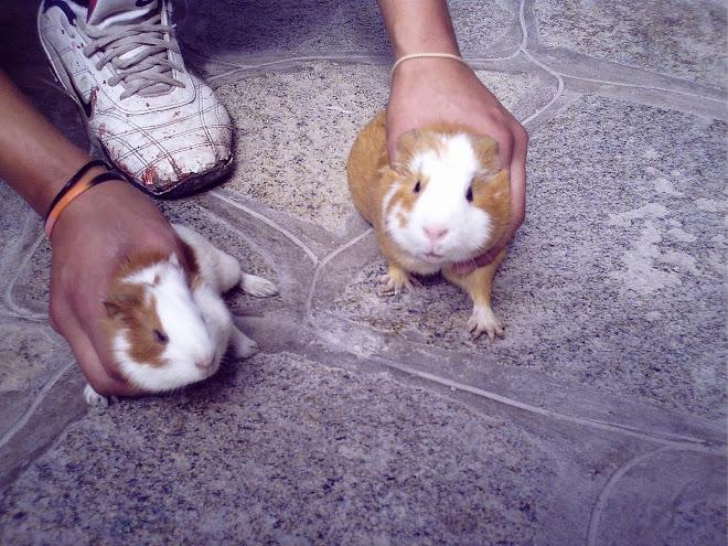 Ratinho gostoso rs...