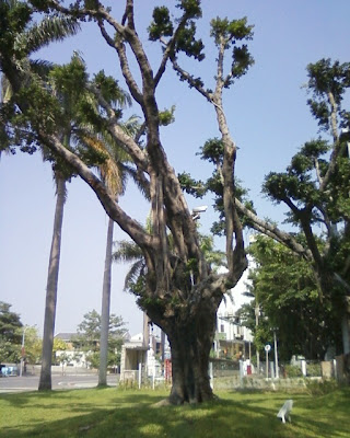馬兵營 台南地方法院