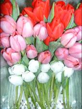 Tulipes en rang