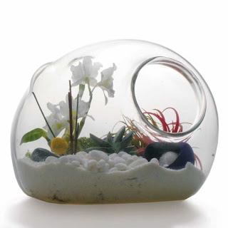 Video Tutorial How to Make a Terrarium : Garden Art In Glass