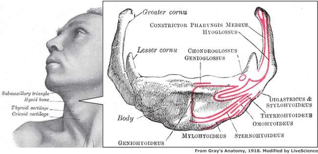 Anatomía Topográfica UV2010\