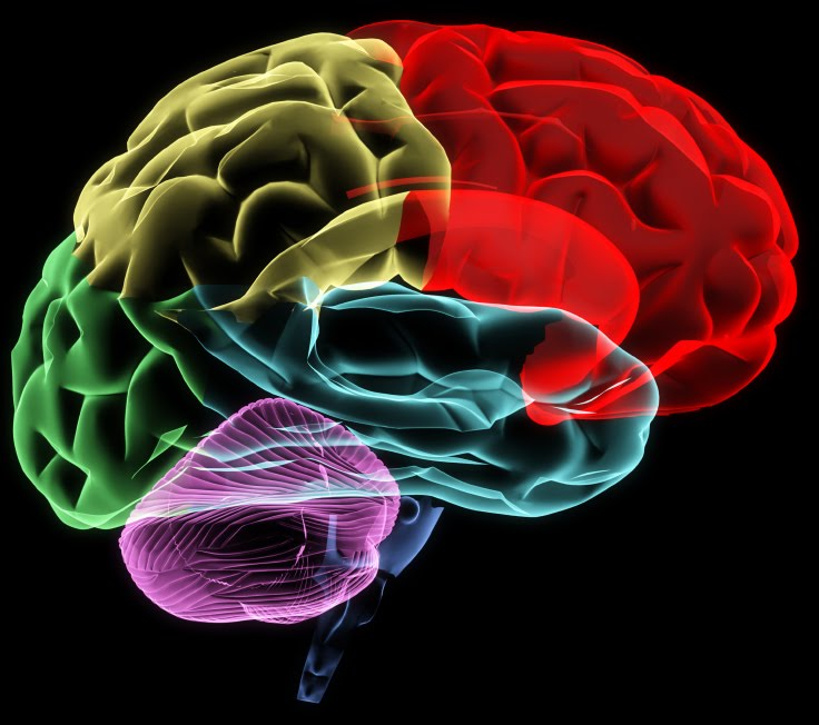 colorful brain images