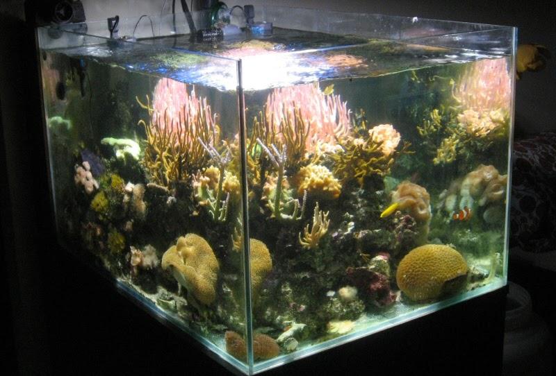 acquariando e acquari acquario marino completo in vendita