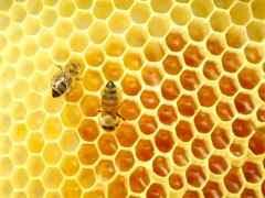 Miel con restos de pesticidas