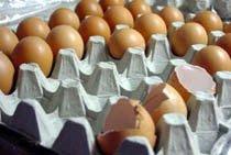 Cámaras Frigorícas para los Huevos