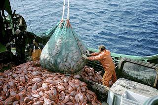 MANIPULACION a bordo clave para obtener un pescado de calidad
